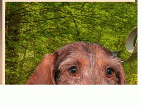 Kennel Iz Novo-Peredelkino - iznovo-peredelkino.ru